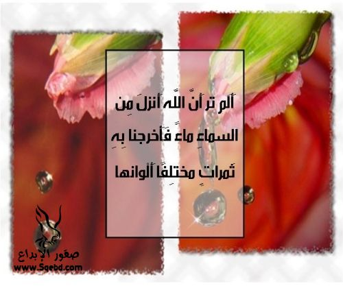 2013_1384551048_768.jpg