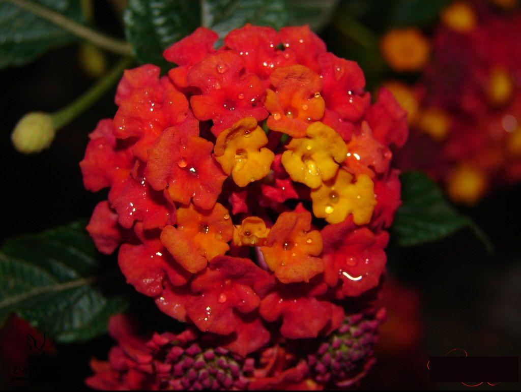 ���� ��� ��� 2016 Photos-Flowers-sowar-ward ���� ��� ����� 2013_1385009531_885.