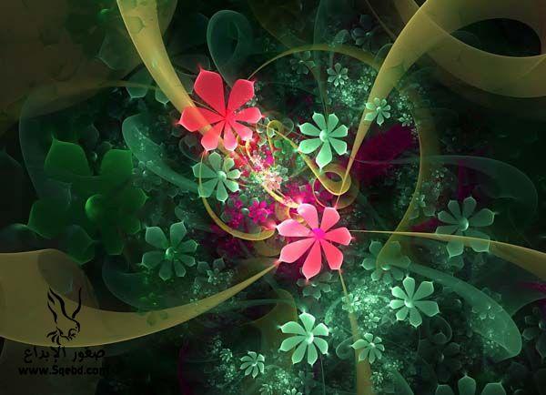 ���� ��� ��� 2016 Photos-Flowers-sowar-ward ���� ��� ����� 2013_1385009534_926.