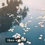 2013_1386339396_390.jpg