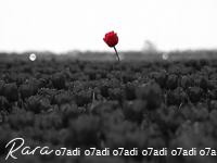 ���� ������ ������ ������ ����� ������� �� ����� ������ �� ���������� new_1435361949_872.p