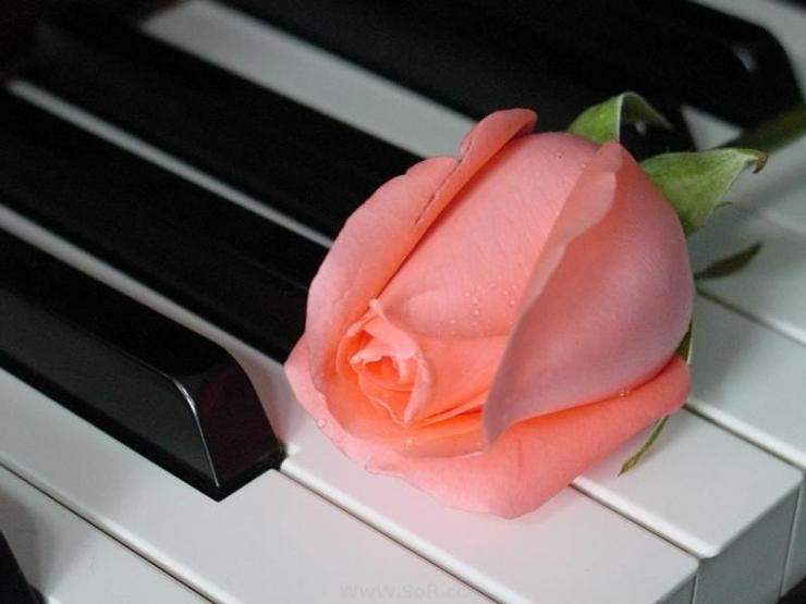 اعرفي الحب الصادق والكاذب .. فلكي ان تقيمي حبك new_1460019954_431.j